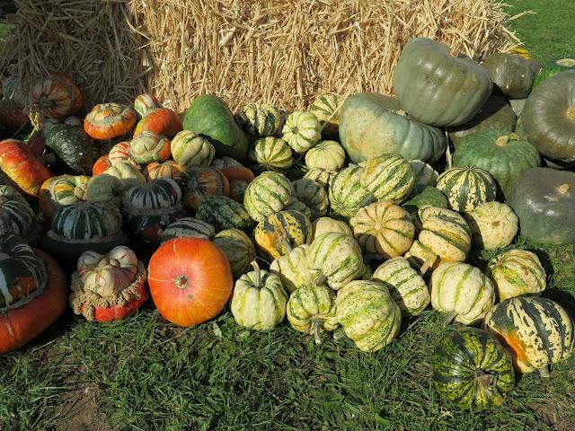 pumpkins, lathcoats farm, apple day, essex