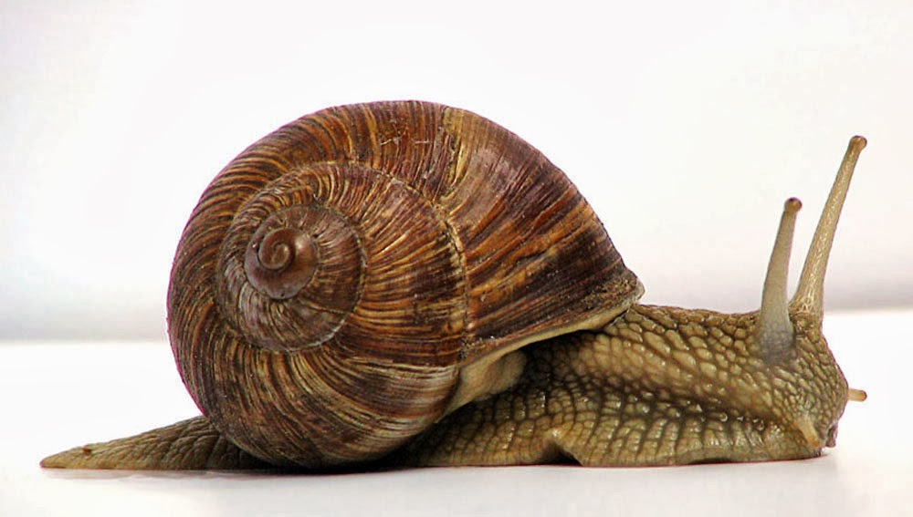 What is a Mollusk and types of mollusks? - Ency123