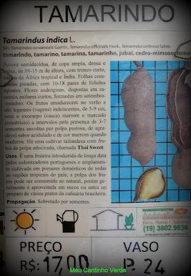 Venda TAMARINDO - ( Tamarindus indica L. )