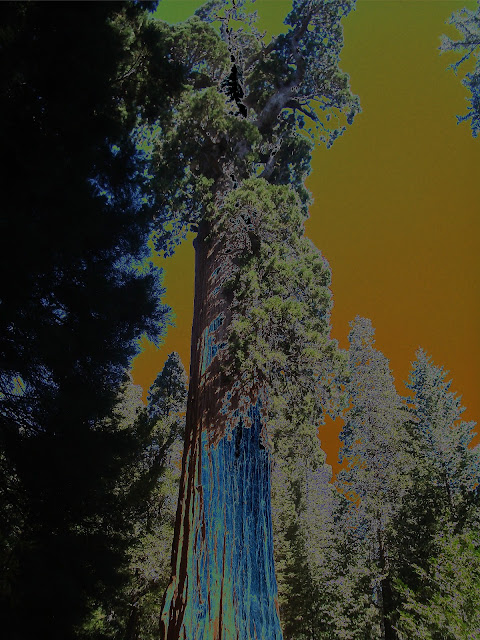 Photo by Cliff Hutson - General Grant (tree) - Kings Canyon National Park