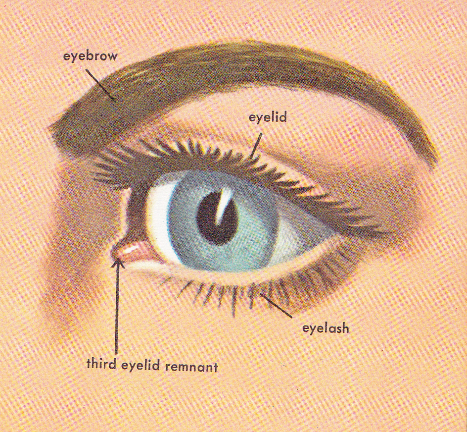 Simple Eye Diagram Images Free Download