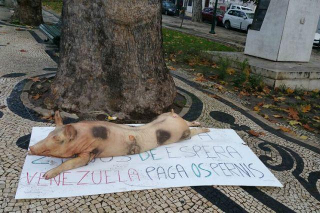 Portugal le deja un mensaje a Nicolás Maduro bajo un puerco muerto - Paga lo que Debes!
