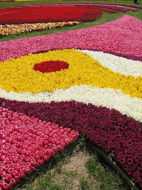 kompozycja tulipanów na żuławskim Tulipanie w Mokrym Dworze