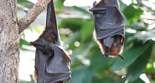 Fim da humanidade? Morcegos caem misteriosamente mortos em Israel