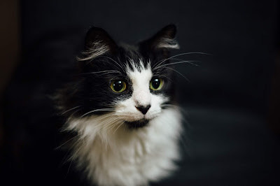 The Most Beautiful Types Of Cats And Their Names
