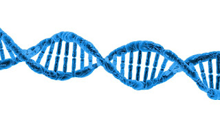 łańcuch dna, badania, genetyka