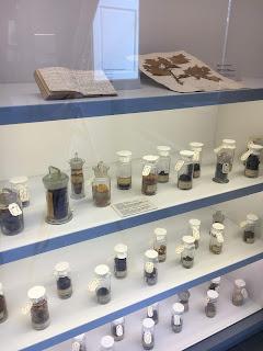 ピサ植物園の植物博物館のハーブ