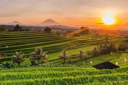 Keindahan Alam Ubud yang Menggoda Rasa untuk Kembali