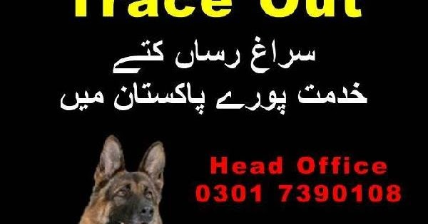 Trace Out, کھوجی کتے, Army Dog Centre Trained Dogs