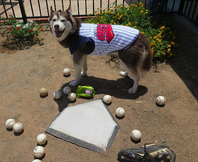 Dog Friendly baseball games.  Dogs, Pet Friendly events