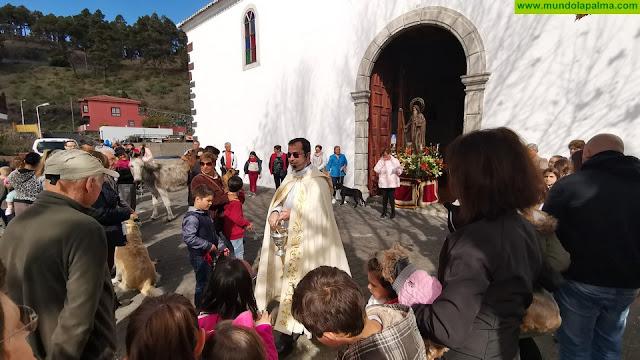La imagen de San Antonio Abad preside este año la tradicional bendición de los animales