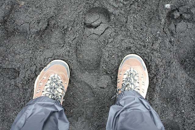 Standing at the black sand beach in Vik, Iceland.