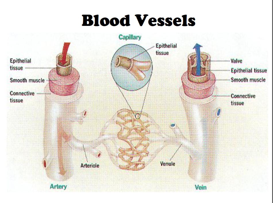 BIOLOGY JOURNAL: August 2012