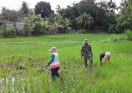 Di Kelurahan Tanah Seribu, Babinsa Serda Syahril Ahkwan Dampingi Petani Membersihkan Gulma