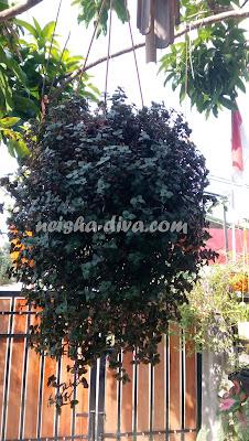 Pucuk Ungu by Rumah Bunga Neisha
