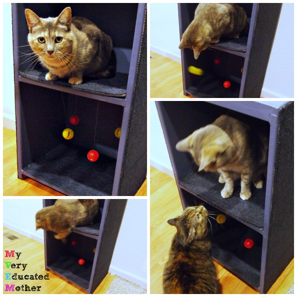 Our cats like to start playing on our DIY Cat Tower and Scratching Post at about midnight, or once I fall asleep. They're awesome like that!