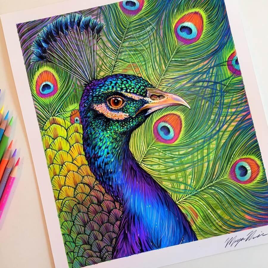 08-Peacock-Animal-Drawings-www-designstack-co