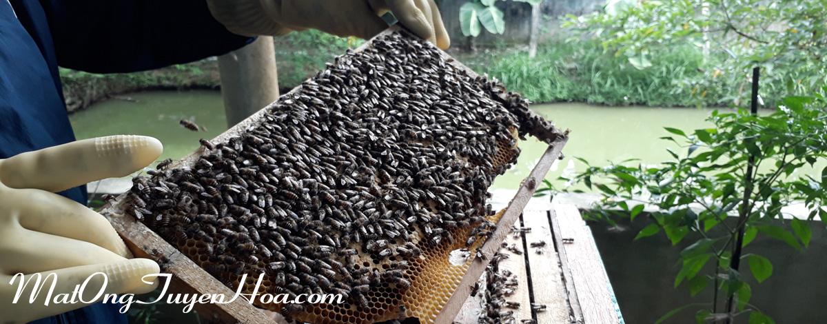 mật ong rừng tuyên hóa