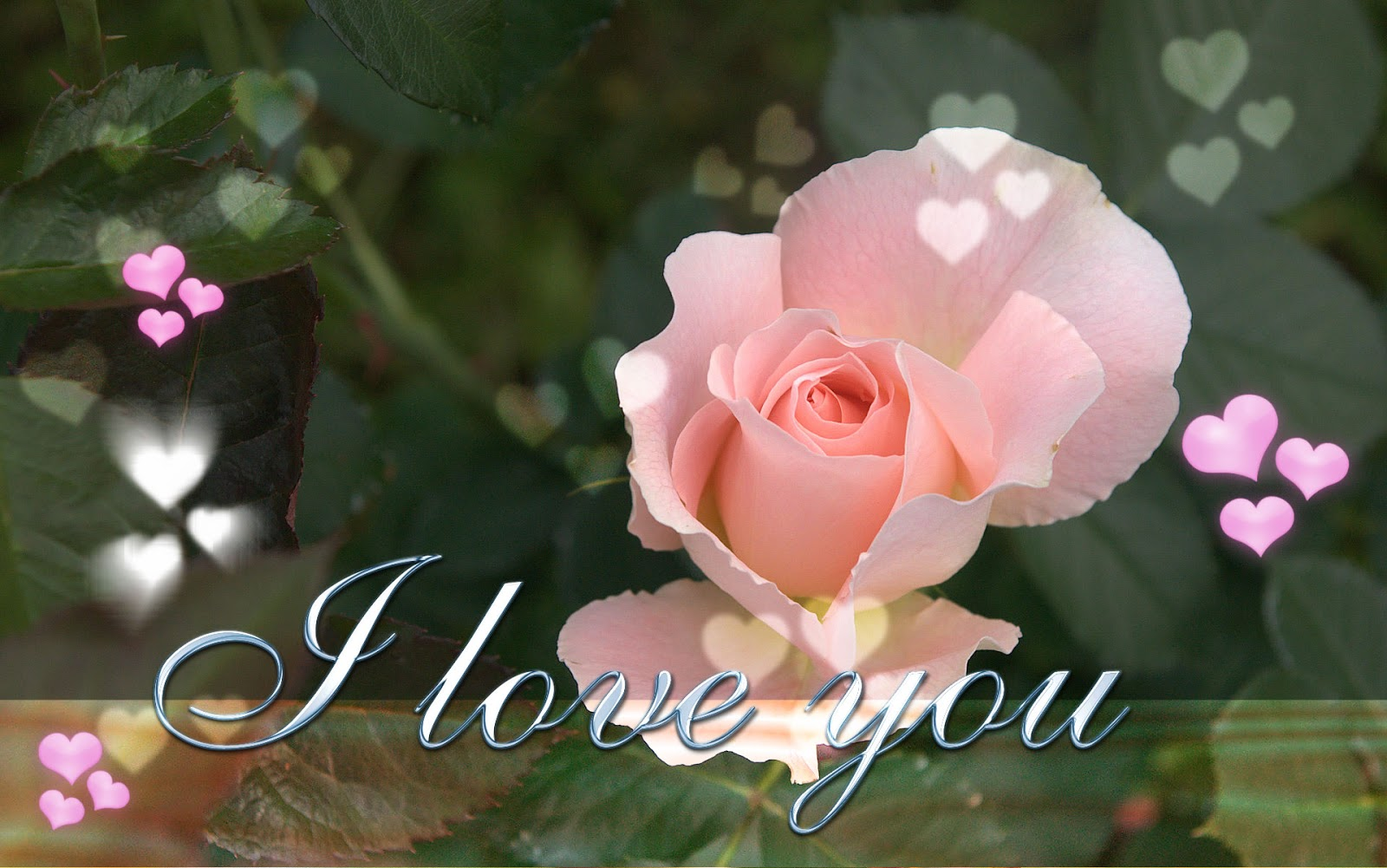 new latest i love you wallpapers on this valentines day 2013 read