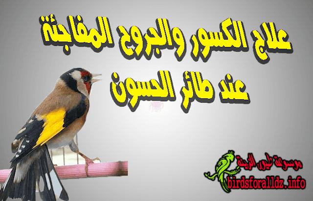 علاج الكسور والجروح المفاجئة عند طائر الحسون
