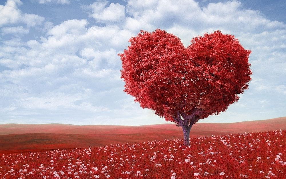 Love-shaped tree