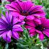 Rośliny wzmacniające odporność. Echinacea i eleuterokok cz V.