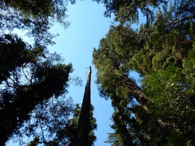 Sequoias, Yosemite National Park, California, US, Elisa N, Blog de Viajes