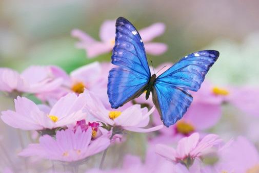 Guerriero Della Luce  Farfalle Immagini