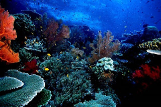 Places Bunaken National Park