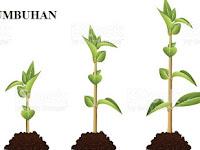 4 Langkah Percobaan Pengaruh Faktor Luar Terhadap Pertumbuhan Tumbuhan