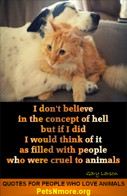 animal, dog, cat, pet, animal, inspiring quotes for animal lovers, petsnmore.org, hell