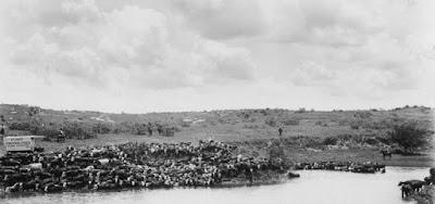 Watering the herd, JA Ranch, Texas c1903