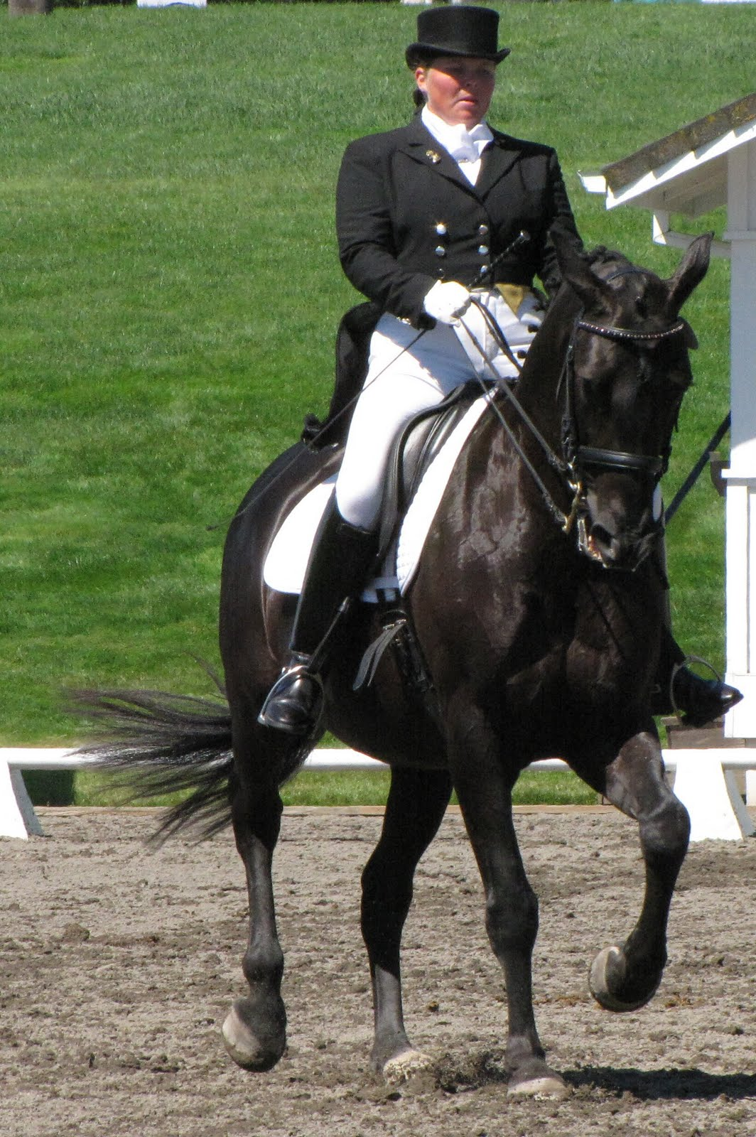 Writing And Riding Dressage At Devonwood 2011