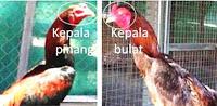 kepala ayam bangkok