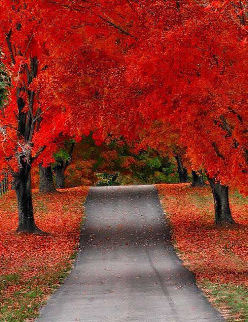 amazing tree lined path   wonderful
