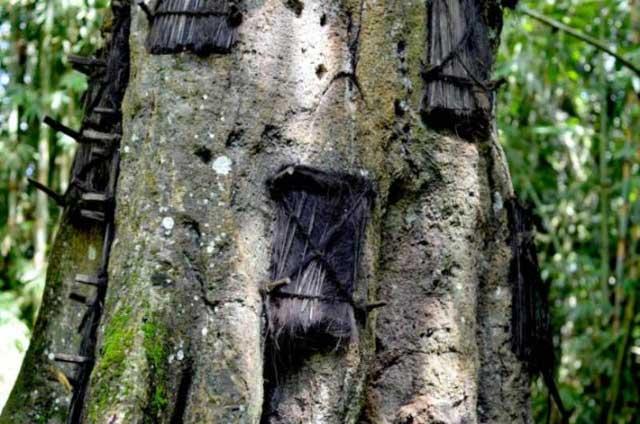Memasukkan Mayat Bayi ke Dalam Pohon