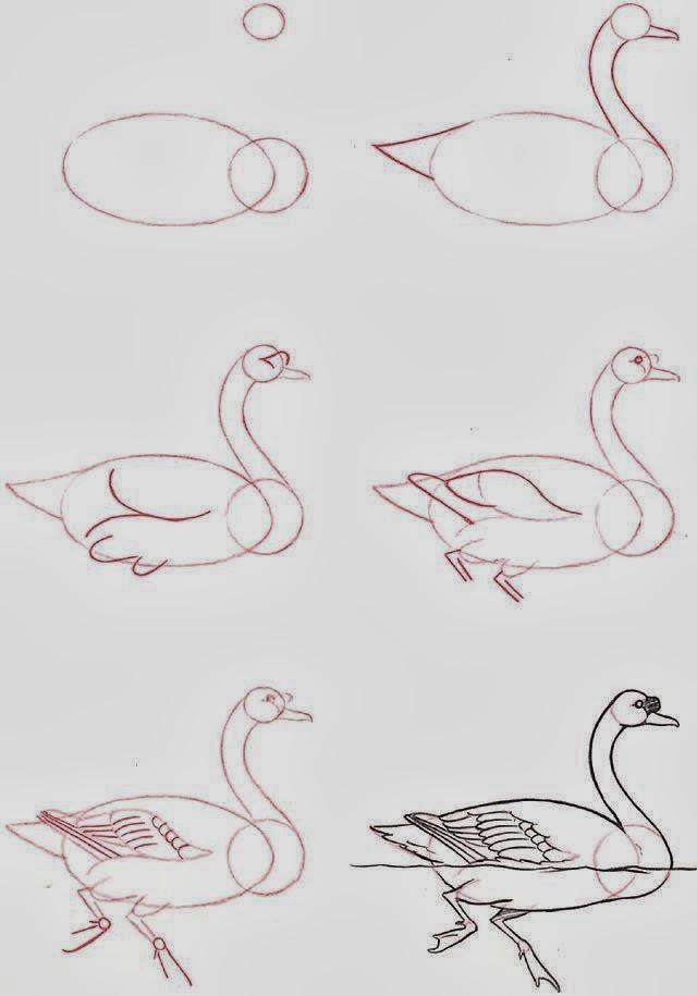 Le coin des enfants apprendre dessiner un cygne - Dessiner une chatte ...
