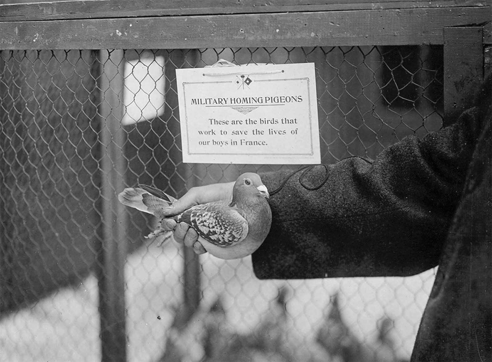 Animales en la Primera Guerra Mundial, 1914-1918.