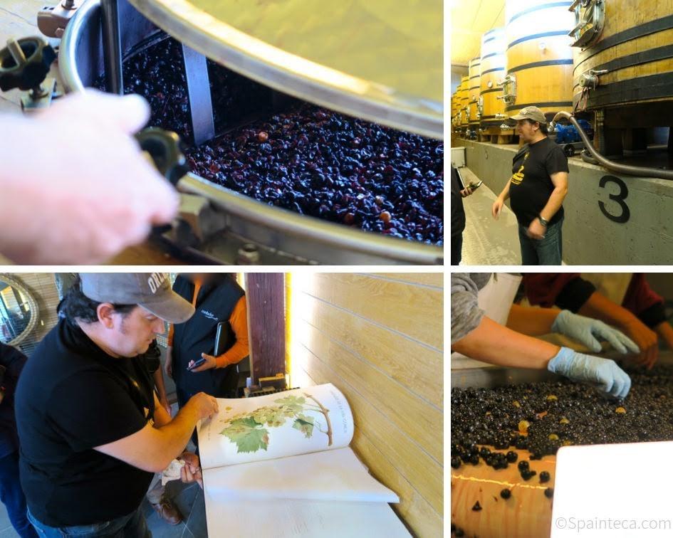 BODEGA CONTADOR ボデガコンタドールでワイン醸造を説明するベンハミン·ロメオ氏