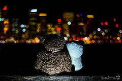 Oso marrón de peluche sentado de espaldas junto a un oso panda de peluche. Al fondo, las luces de una gran ciudad en la noche.
