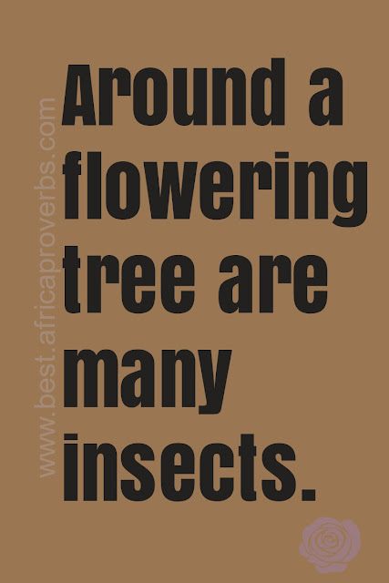 Around a flowering tree are many insects. African Proverb