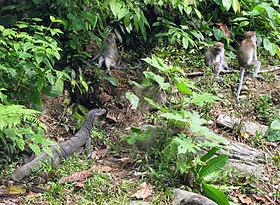 Obyek Wisata Yang Terkenal di Kabupaten Gayo Lues
