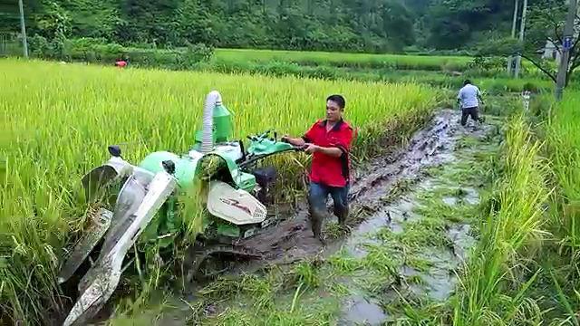 Ngeri! Benih Padi Asal Cina Yang Mengandung Bakteri Berbahaya Sudah Menyebar Ke Pelosok Jawa