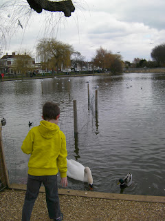 baffins pond copnor portsmouth feeding ducks