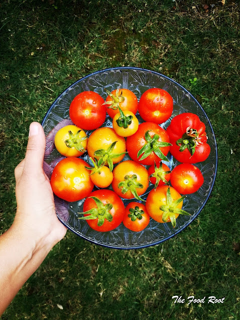 what a stunning harvest. this is my first batch of tomatoes.