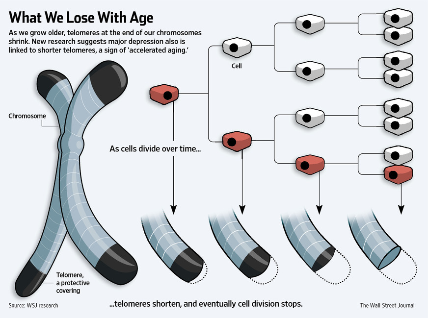 Impatience Causes Aging, It Triggers Telomere Shortening ...