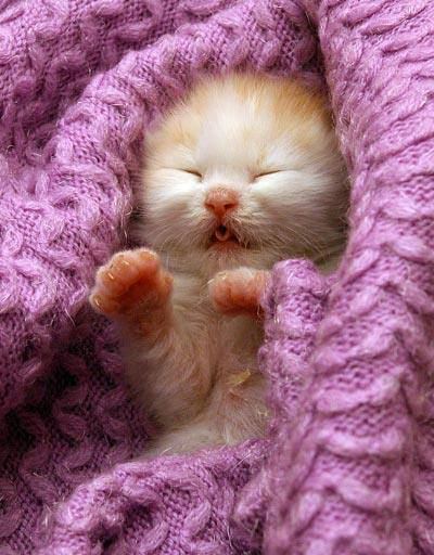 gatinho bebe