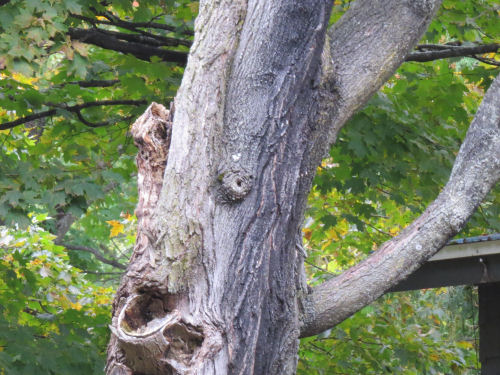 funny face in tree