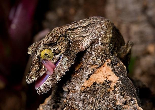 25 Animales camuflados, escondidos en sus hábitats naturales ...