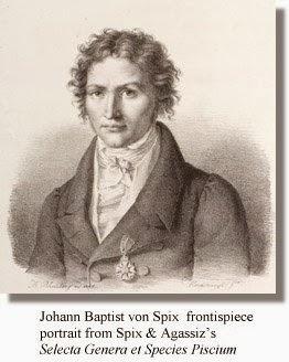 Johann Baptist von Spix (1781-1826) 3